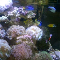 Photo taken at New Oasis Aquarium by Muhamad S. on 6/14/2014