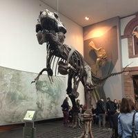 Das Foto wurde bei Senckenberg Naturmuseum von Ian W. am 2/5/2013 aufgenommen