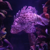 Photo taken at Sea Life Aquarium by Jessica M. on 7/28/2013
