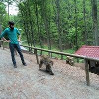 Photo taken at Wild- & Erlebnispark Daun by Luda D. on 5/24/2015