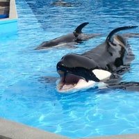 Photo taken at SeaWorld Orlando by Sarah L. on 12/28/2012