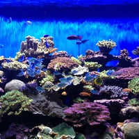 Photo taken at Birch Aquarium At Scripps Institution of Oceanography by Willie E. on 1/20/2013