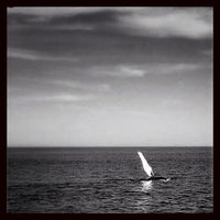 Photo taken at Bar Harbor Whale Watch Co. by Chad D. on 7/13/2013