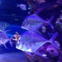 5/6/2013 tarihinde Serdar A.ziyaretçi tarafından Antalya Aquarium'de çekilen fotoğraf