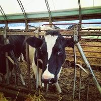 Photo taken at Cobblestone Valley Farm by Daniel G. on 11/12/2013