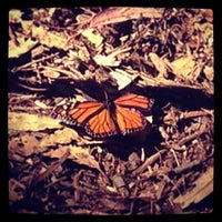 Photo taken at Coronado Butterfly Preserve by Alfonso G. on 2/17/2013