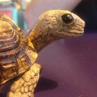 Photo taken at Turtle Bay Taqueria by Monika K. on 10/15/2012