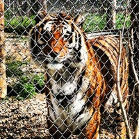 Photo taken at Exotic Feline Rescue Center by Jonalyn P. on 4/3/2012