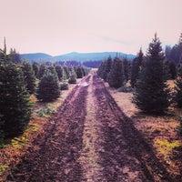 photo taken at northern lights christmas tree farm by aaron r on 1129 - Northern Lights Christmas Tree Farm