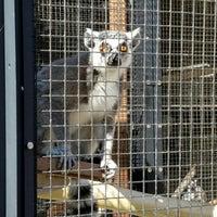 Photo taken at Duke Lemur Center by Andrea G. on 4/15/2016