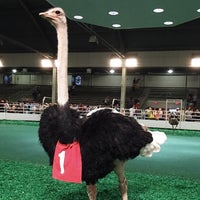Photo taken at Ostrich Races by Victoria M. on 10/7/2014