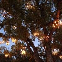 Chandelier Tree - Tree in Silver Lake