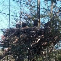 Photo taken at Bald Eagle Exhibit by Alan C. on 10/27/2013