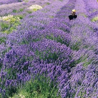 Photo taken at Hood River Lavender by Bommy C. on 8/11/2017