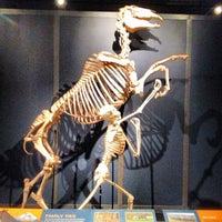 Снимок сделан в San Diego Natural History Museum пользователем Maya P. 12/17/2012