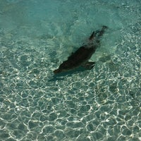 Photo taken at Dolphin Maroma By Dolphin Discovery by Brisa V. on 9/6/2013