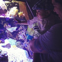 Photo taken at SEA LIFE Aquarium by Charessa G. on 7/6/2013
