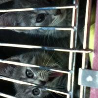 Photo taken at Animal Welfare League of Arlington by Jerri Lyn M. on 10/27/2013