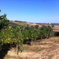 Fattoria Le Terrazze - Winery in Numana