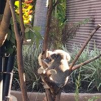 Foto scattata a Koala Exhibit da Abby A. il 1/20/2018