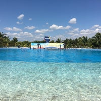 Photo taken at Dolphin Maroma By Dolphin Discovery by Rebecka R. on 3/5/2018