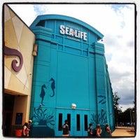 sea life grapevine aquarium grapevine mills 28 tips. Black Bedroom Furniture Sets. Home Design Ideas