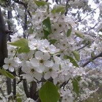 Photo taken at Skinner Park by Greer C. on 5/4/2013