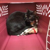 Photo taken at Webb Bridge Animal Hospital by Cheryl Z. on 4/19/2014
