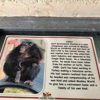Photo taken at Monkey World - Ape Rescue Centre by Burhan K. on 6/18/2017