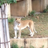 Photo taken at Great Cats at The National Zoo by Jeff on 10/20/2012