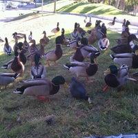 Photo taken at Eisenhower Park by Stefanie P. on 10/27/2012