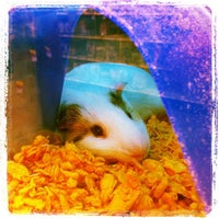 Photo taken at PetSmart by Kathlyn M. on 10/6/2012