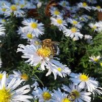 Photo taken at Botanischer Garten by Eddy on 10/6/2012