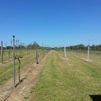 Photo taken at Sirromet Winery by Dave D. on 10/4/2012