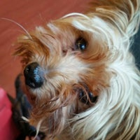 Photo taken at The Big Easy Animal Hospital by Lindsey R. on 10/7/2014