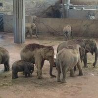 Das Foto wurde bei Kölner Zoo von Kate K. am 7/9/2013 aufgenommen