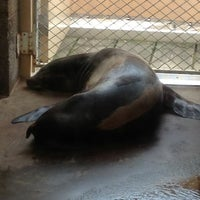 Photo taken at Como Zoo - Seal House And Show by Denton P. on 7/6/2013