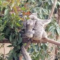 Foto scattata a Koala Exhibit da Samantha B. il 12/26/2017