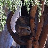 10/17/2011 tarihinde Rafael C.ziyaretçi tarafından Koala Exhibit'de çekilen fotoğraf