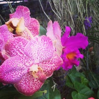 Photo taken at Orchid Farm by Anni S. on 9/18/2013