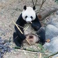 Foto tirada no(a) Singapore Zoo por Kerem A. em 1/8/2013