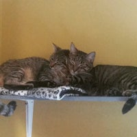 Photo taken at Kings County Pet Adoption by Heather on 4/15/2015
