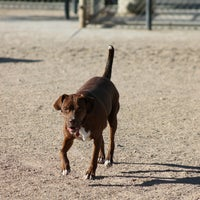 Photo taken at The Animal Foundation (Lied Animal Shelter) by Aubree S. on 1/20/2013