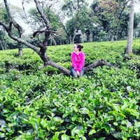 Photo taken at Kebun Teh Wonosari by DienTa R. on 5/31/2016
