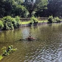 6/29/2013 tarihinde Matt N.ziyaretçi tarafından Hampstead Heath Ponds'de çekilen fotoğraf