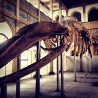 Foto tirada no(a) Museo Nacional de Historia Natural por Mauricio G. em 7/19/2013