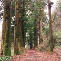 1/21/2018にJiNa K.が箱根旧街道 杉並木で撮った写真