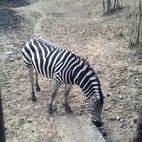 Photo taken at Tbilisi Zoo | თბილისის ზოოპარკი by Mike on 3/9/2013