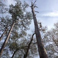 Photo taken at Congaree National Park by David M. on 12/23/2012