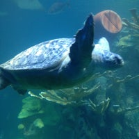 Photo taken at New England Aquarium by David M. on 12/15/2013